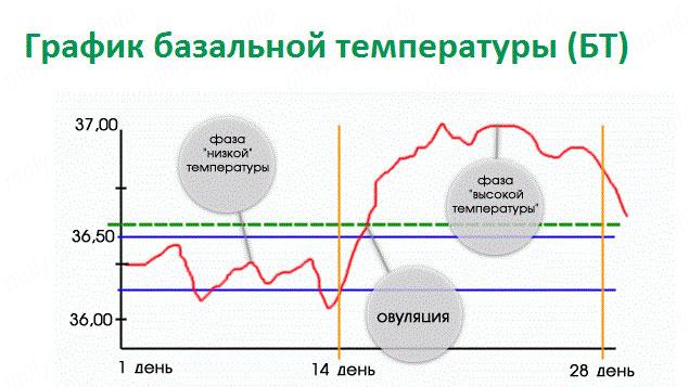 Какая температура у беременных базальная