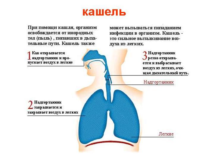 Как сделать кашель своими руками 17